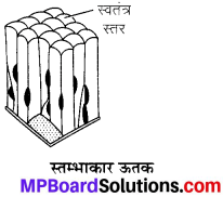 MP Board Class 9th Science Solutions Chapter 6 ऊतक image 29