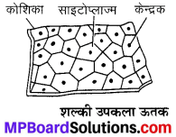 MP Board Class 9th Science Solutions Chapter 6 ऊतक image 33