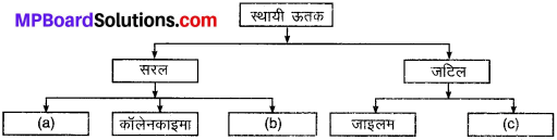 MP Board Class 9th Science Solutions Chapter 6 ऊतक image 7