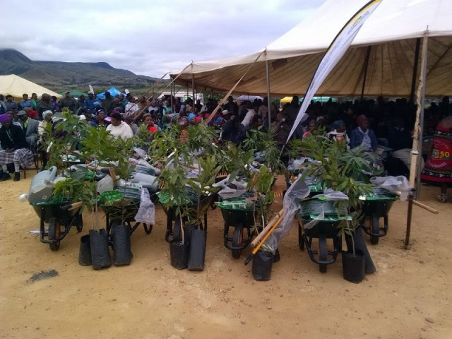 Mpumalanga provincial communities urged to plant trees and vegetables as government unveils tools. Photo by Anna Ntabane, Mpumalanga Guardian.