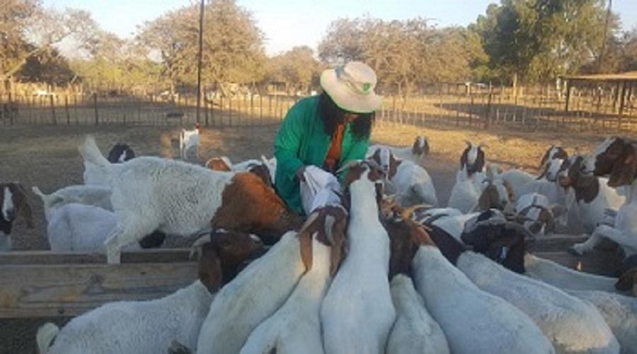 Rearing goats a boon for young graduate | Mpumalanga Guardian
