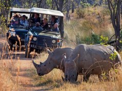 South Africa tourism industry feels COVID-19 impact