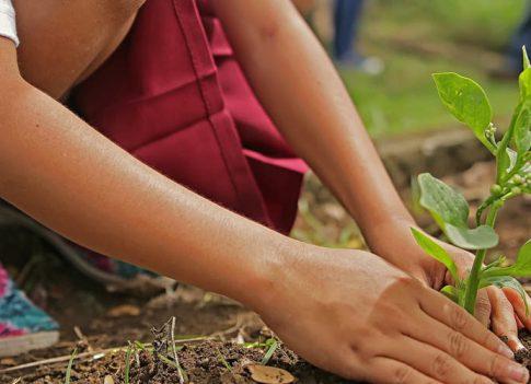 Une alternative aux pesticides