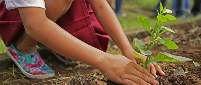 Jardiner c'est bien, sans pesticides c'est encore mieux !