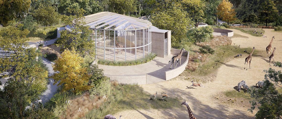 Le zoo à l'heure africaine d'ici 2021 | M+ Mulhouse
