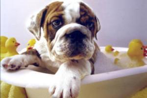 Jak kąpać psa