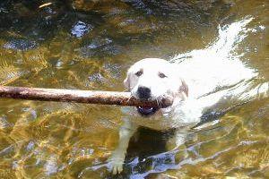 Jak psu usunąć kleszcza