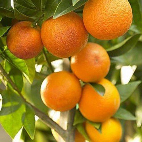 -संत्र्यांचा जिल्हा