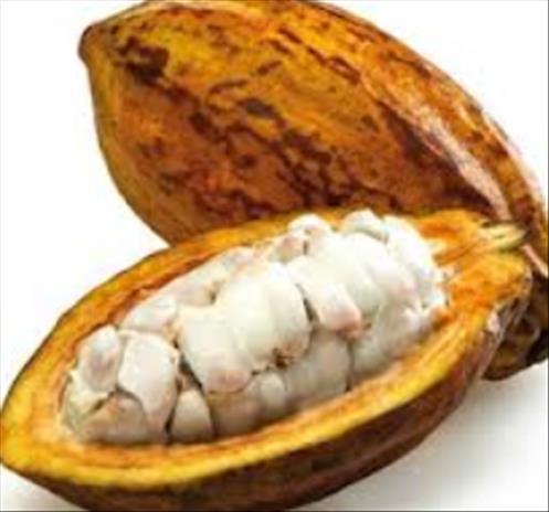F 232 Ves De Cacao Bio