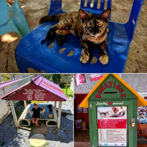 Visiting Lanta Animal Welfare, Ko Lanta – Thailand