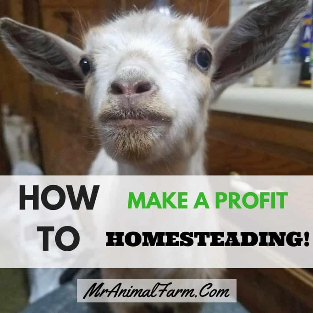 Profitable Homesteading Guide Amp Worksheets