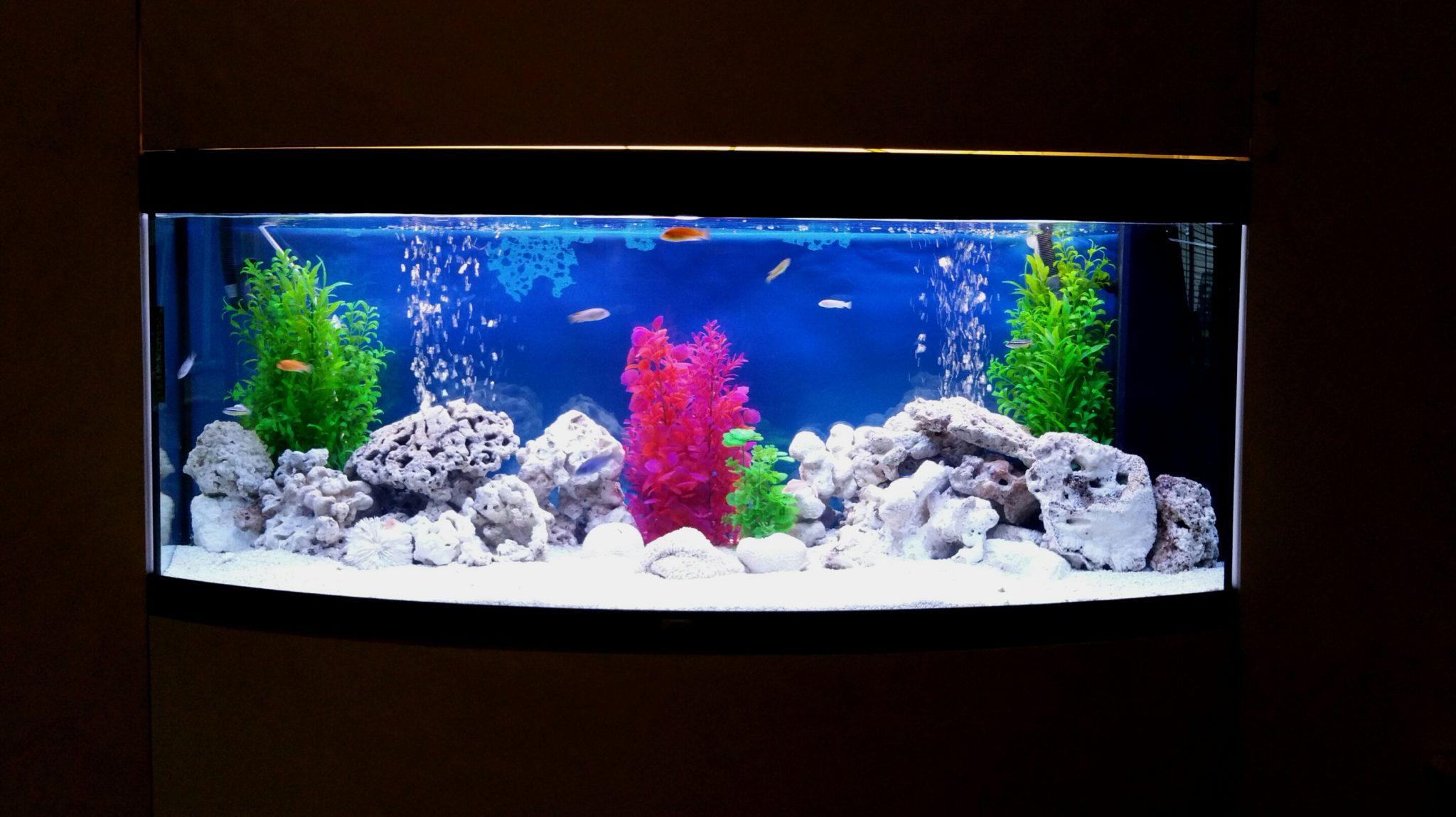 5 Foot In Wall Cichlid Aquarium