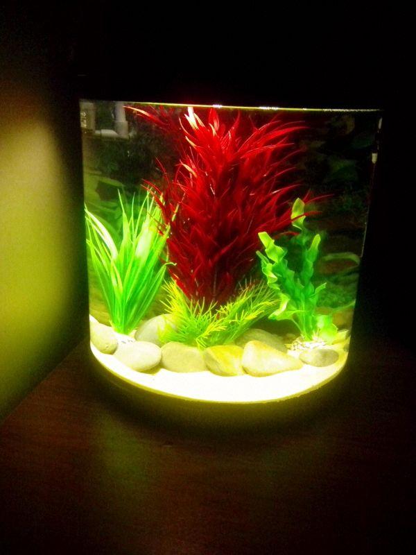 Nano Aquarium With Sydeco Plants