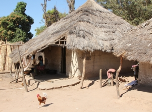 Traditional house (thatch roof, open eaves and no screening)