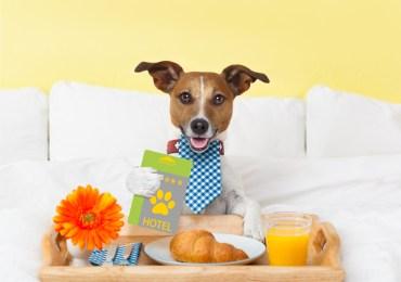 Top 15 Dog Training Myths