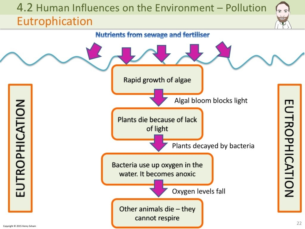 Igcse Pollution Powerpoint
