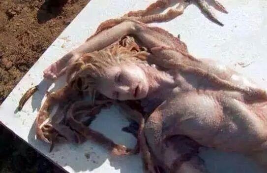 IMG 34676907598924 - Notizia della sirena: la bufala che diventa virale su Facebook
