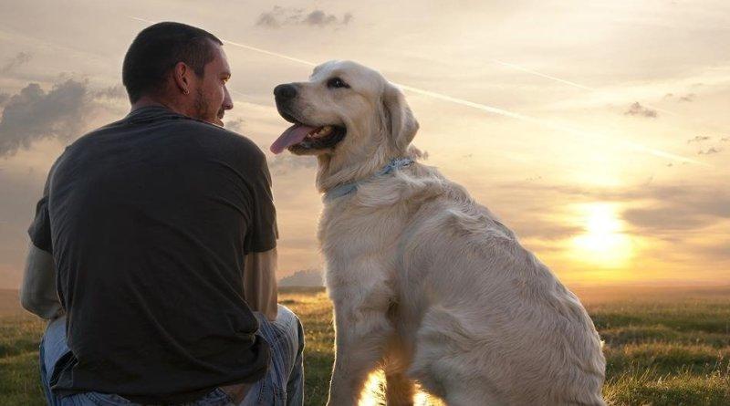 Cose che non sai sul tuo cane