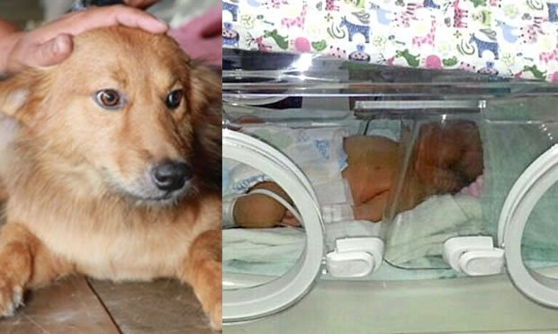 cane eroe neonato - La storia del cane eroe: trova neonata nella discarica e la porta fino a casa