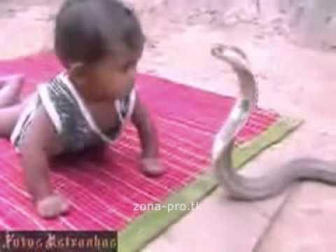 la repubblica2 - Bambino gioca con un cobra [VIDEO]