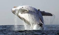magettere3 - Mamma ho visto una Balena!