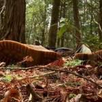 aokigahara foresta dei suicidi 150x150 - 10 luoghi più horror del mondo