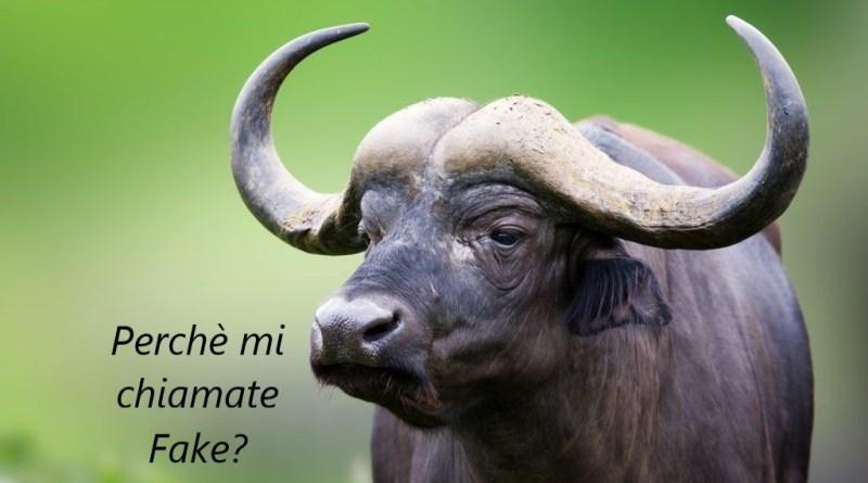 bufala 4 - Perché si dice Bufala?