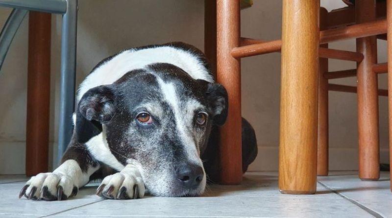 Abbandono di cani: una bella storia a lieto fine