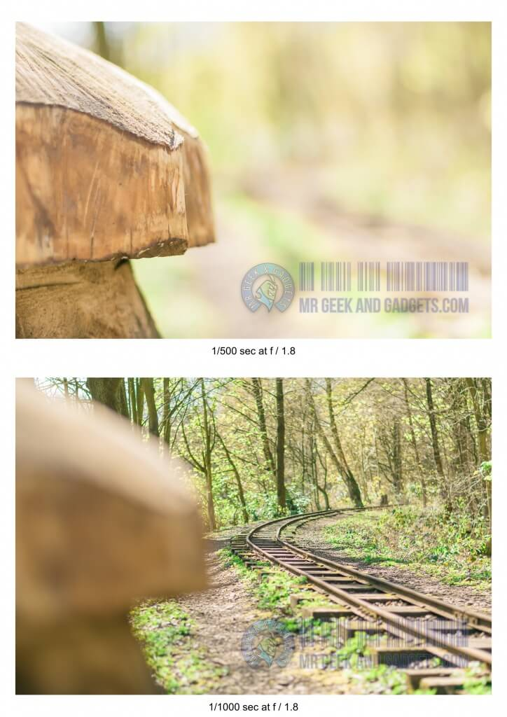 Photography and What is Depth of Field - Tree-Stump-DOF