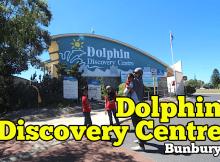 dolphin-discovery-centre-bunbury