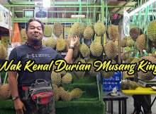 Cara Nak Kenal Buah Durian Musang King 01 copy