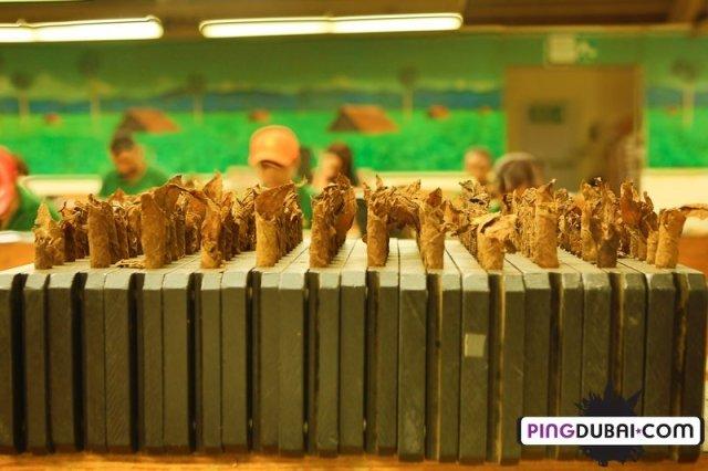 davidoff_cigars_factory_visit_dominican_222