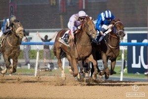 Dubai Horse World Cup 2015