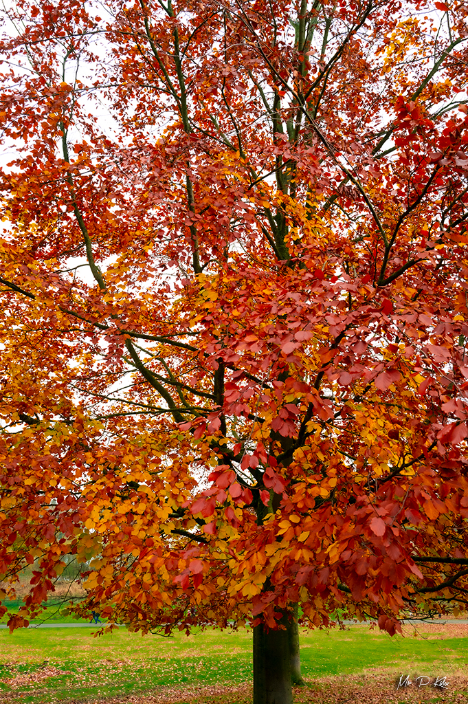 Autumnal colour leaves by Mr P Kalu