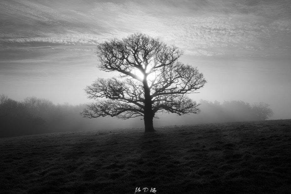Black and white image of the Autumnal sunshine on a misty start to the day in Oxfordshire by MrPKalu