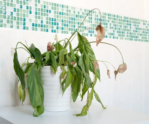 My house plants are dying! What should I do?