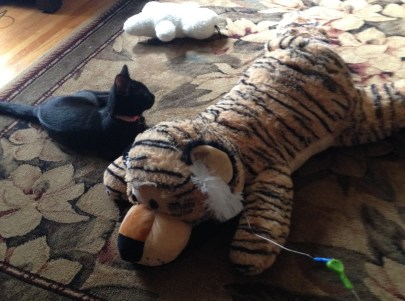 Izzie with Tiger