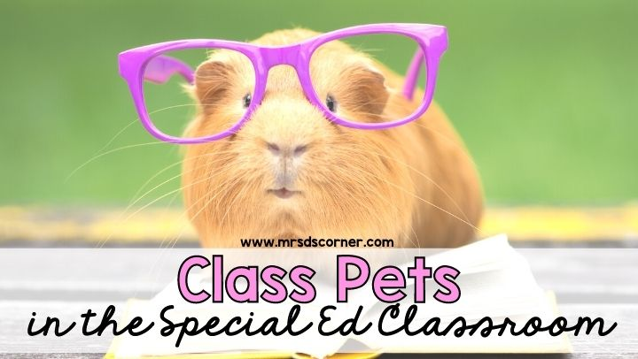 Class Pets in the Special Ed Classroom