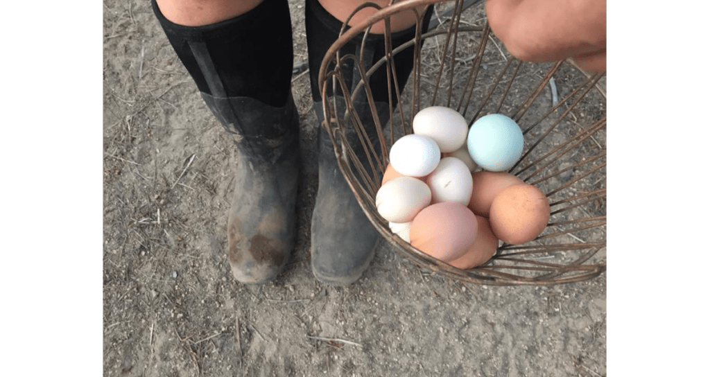 boots-and-eggs