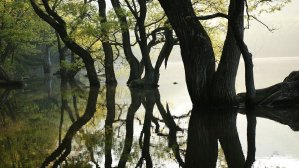 Trees and their reflection in water