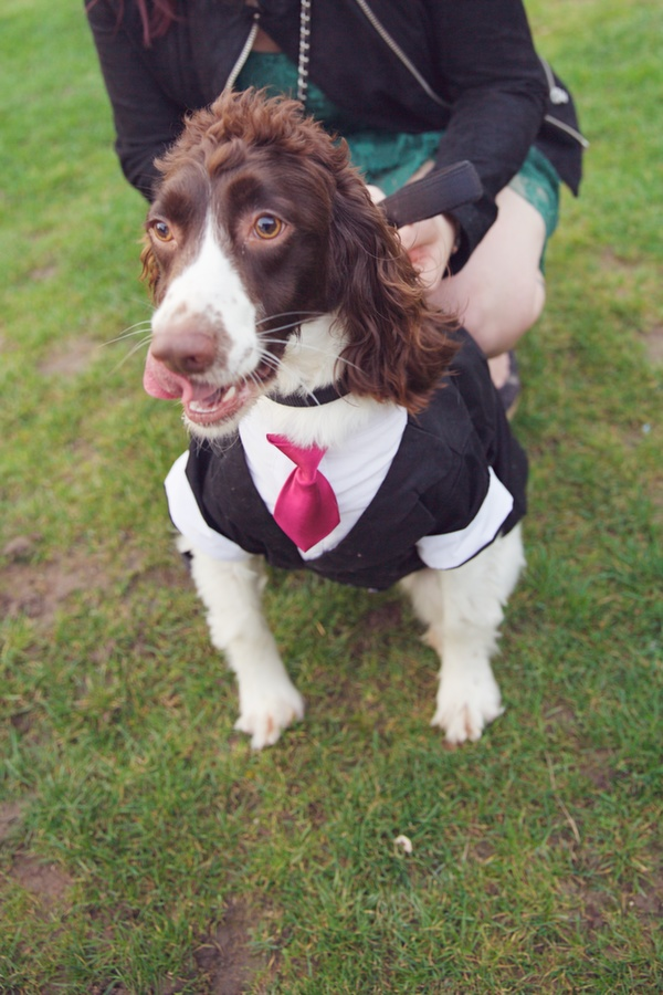 canine wedding guest, dog wedding guest, lucy lou photo