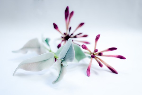 sugar-flowers-honeysuckle, Image Credit - Stopmotion . hautecake by sonnda