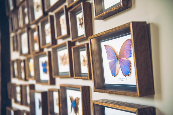 hannah mcclune photography, stoke place, butterfly wall, tropical wedding, tropical wedding styled shoot