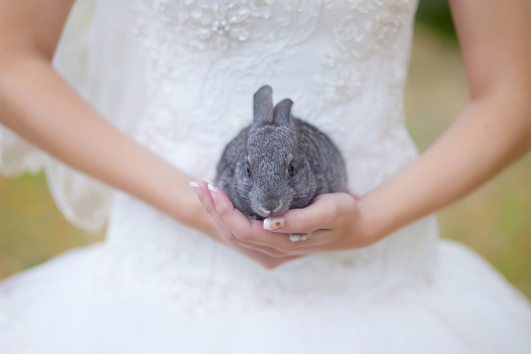 rabbit on hands of the bride, pets at weddings, that black and white cat wedding planning