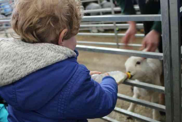 National Forest Adventure Farm Feeding Lambs