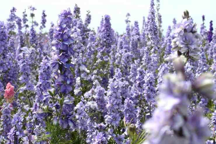 confetti flower fields Pershore