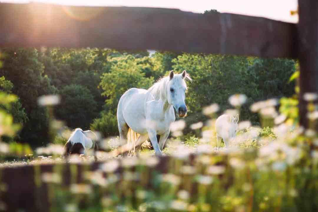 horses grazing sunshine