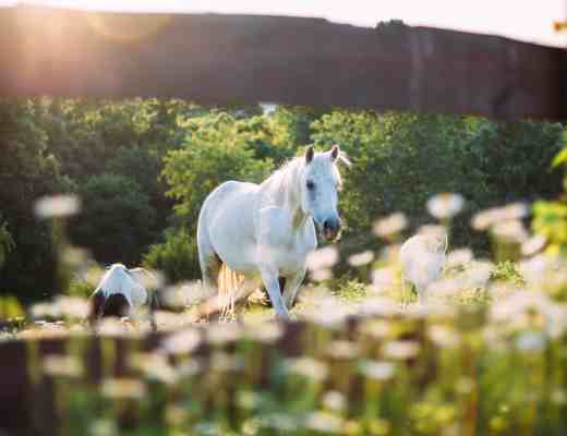 horses grazing sunshine