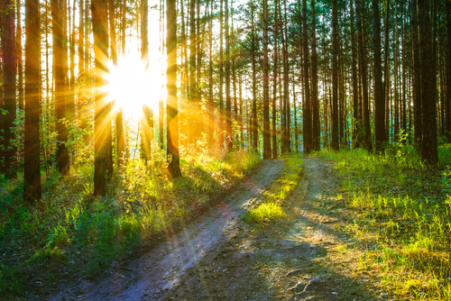 Best Trees to Plant in Full Sun | Mr. Tree, Inc.
