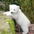 polar bear says hi!